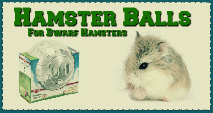 hamster balls for dwarfs