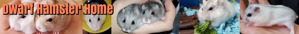 What Human Food Can Chinese Dwarf Hamsters Eat