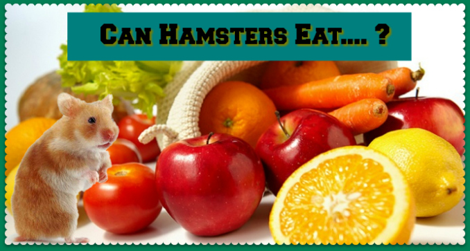 Can Hamsters Eat / Hamster Safe Food List - DwarfHamsterHome com