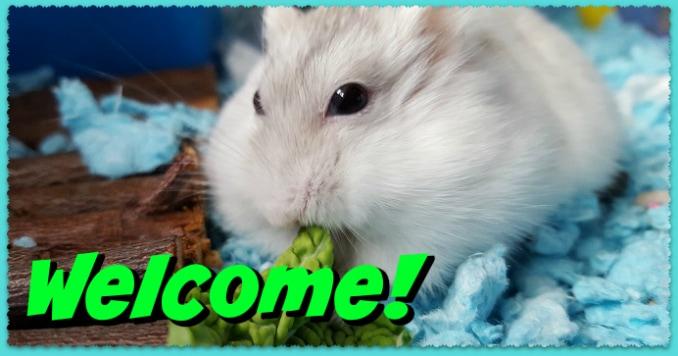 welcome-dwarfhamsterhome