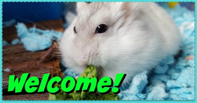dwarf hamster home
