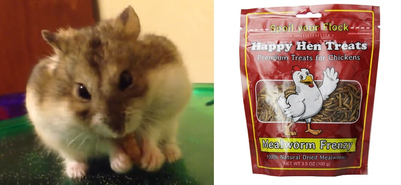 Baby Food That Hamsters Can Eat